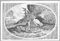 Т. Бьюик. Иллюстрация к басне Эзопа Волк и журавль