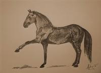Лошадь липицианской породы (рисунок рапидографом)