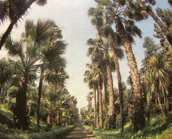 Ботанический сад в Сухуми