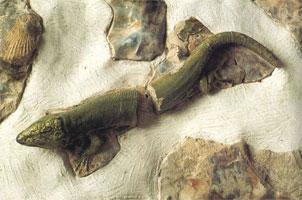 Тюильри. Керамический декор грота (Б. Палисси)